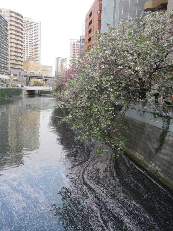 A Rainy Spring Day in Downtown Gotanda, Tokyo
